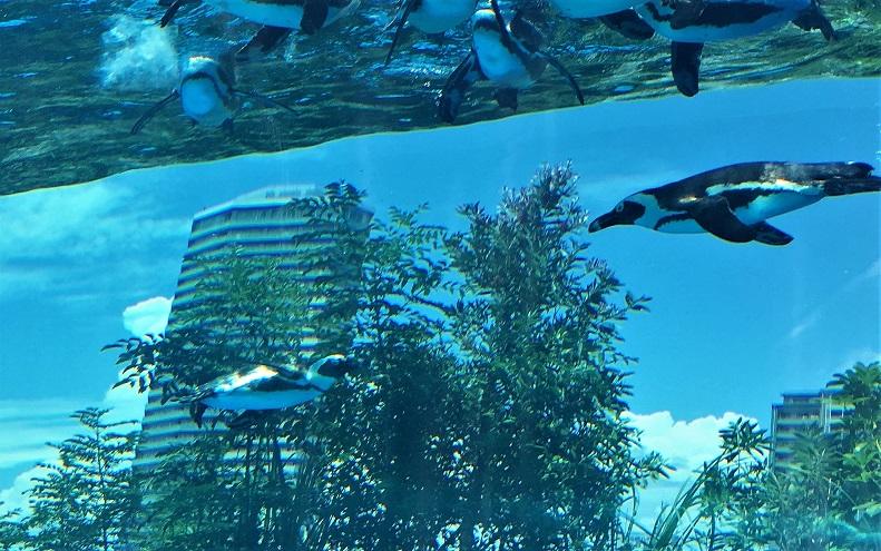 高層ビルが背景の水族館